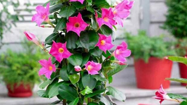 Пора от них избавится! Комнатные растения, которые вредят вашему здоровью