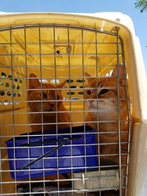Женщина взяла к себе двух 14-летних котов, чтобы они провели старость в ласке и заботе