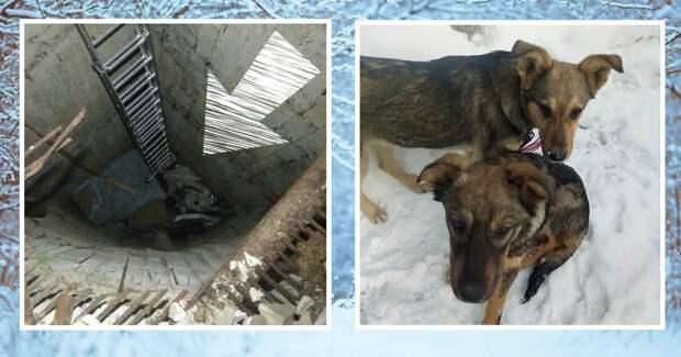 Уехал на рыбалку — вернулся со щенками! История спасения собачек из 8-метрового колодца