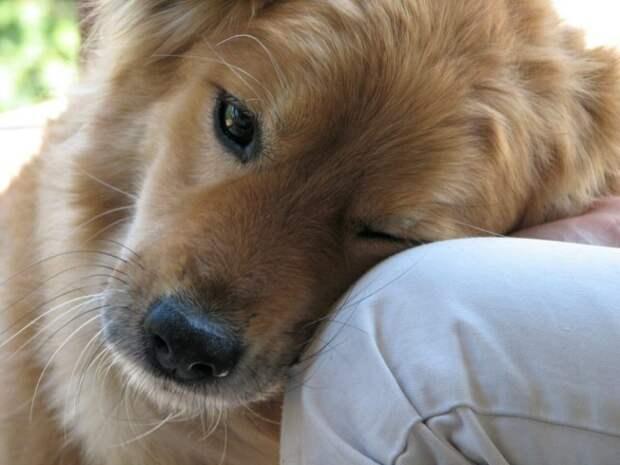 Как хочу изучить я собачий язык! Мне так много ей надо сказать...