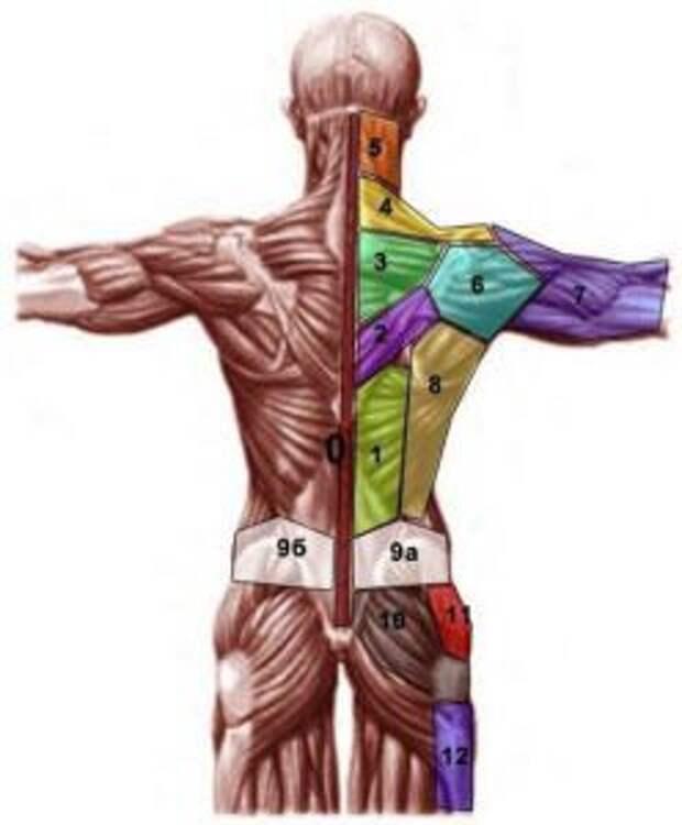 Проекция психосоматических проблем на теле