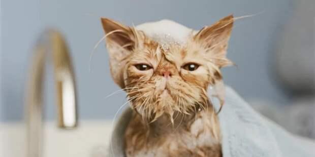 Ваш кот не любит мыться? Тогда мы идем к вам!
