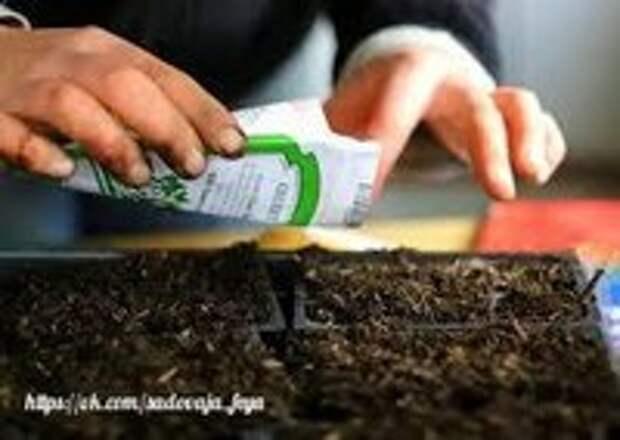 Самый ранний урожай огурцов — от рассады с сильными корнями