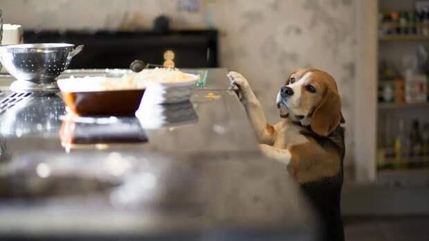 Россиянка научила свою собаку помогать бездомным собратьям
