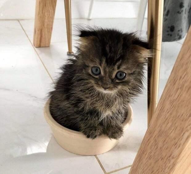 Котенок в горшке