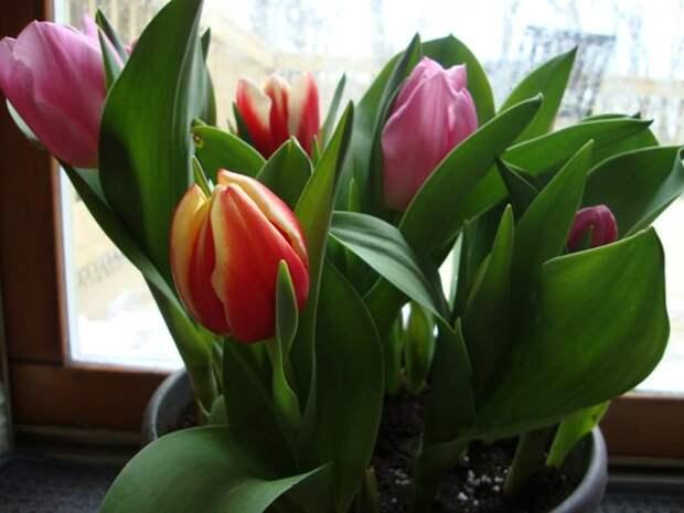 цветы на окне