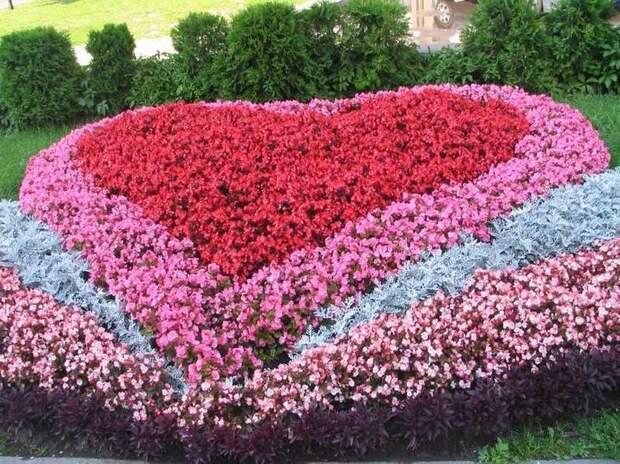 cvetnik-na-dache-foto1.jpg