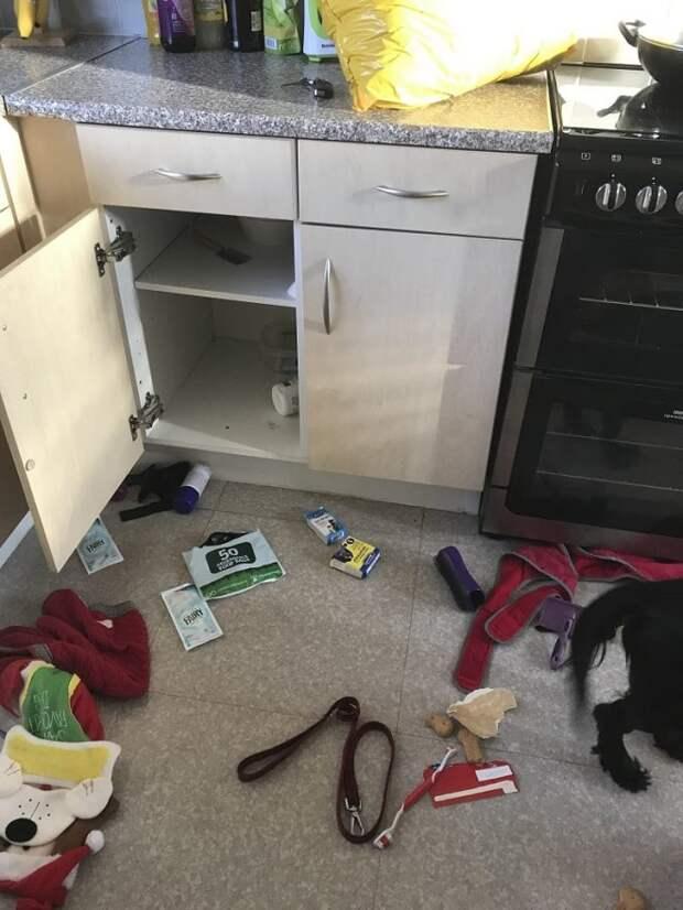 «Ограбление!» — подумали хозяева, зайдя в перевернутую вверх дном квартиру. А «грабитель» сидел прямо перед ними