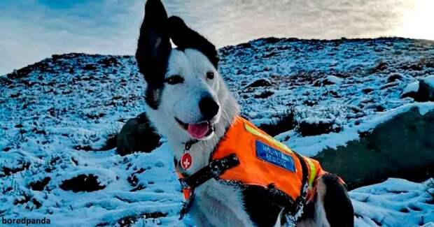 Погребенный в снегу мужчина заснял на фото, как его спасла собака