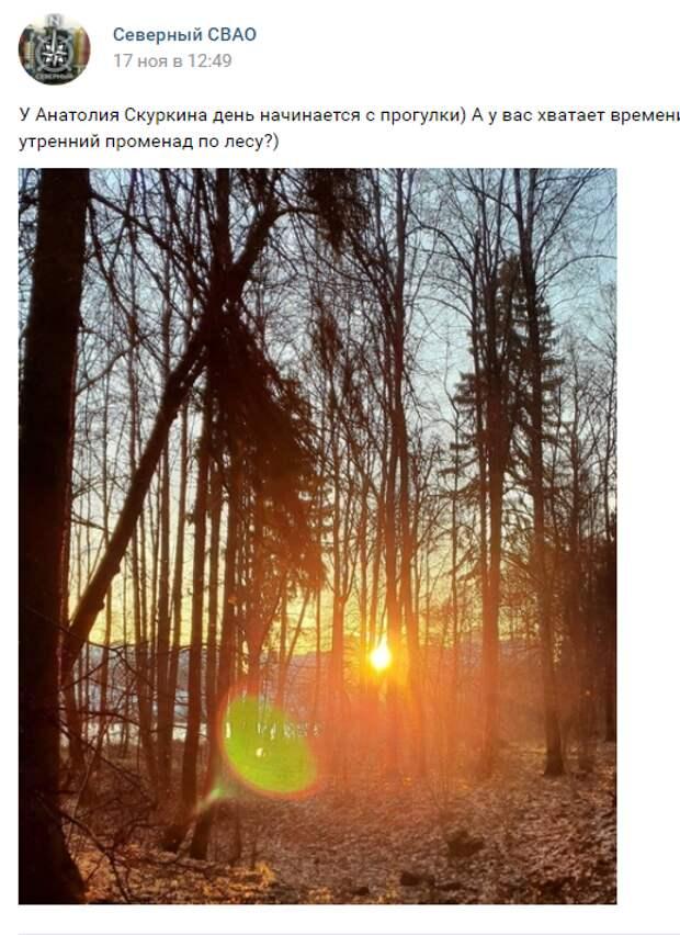 Фотокадр: ноябрьский рассвет в лесу в Северном