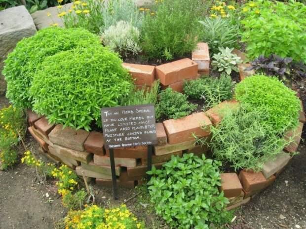 Чайную клумбу можно разбить в любом уголке сада