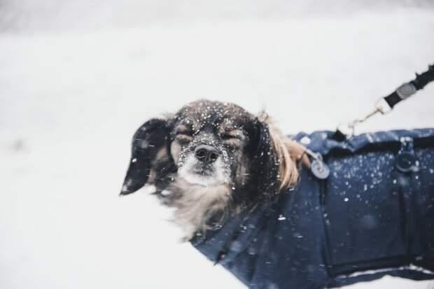Первый день февраля в Удмуртии будет снежным