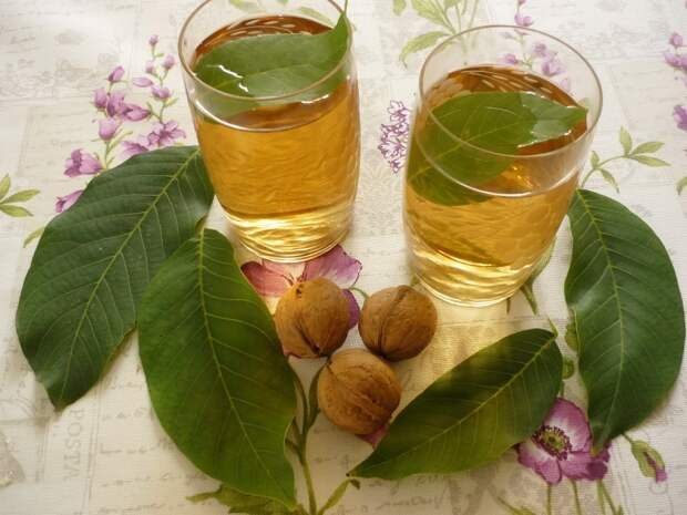 листья грецкого ореха свойства