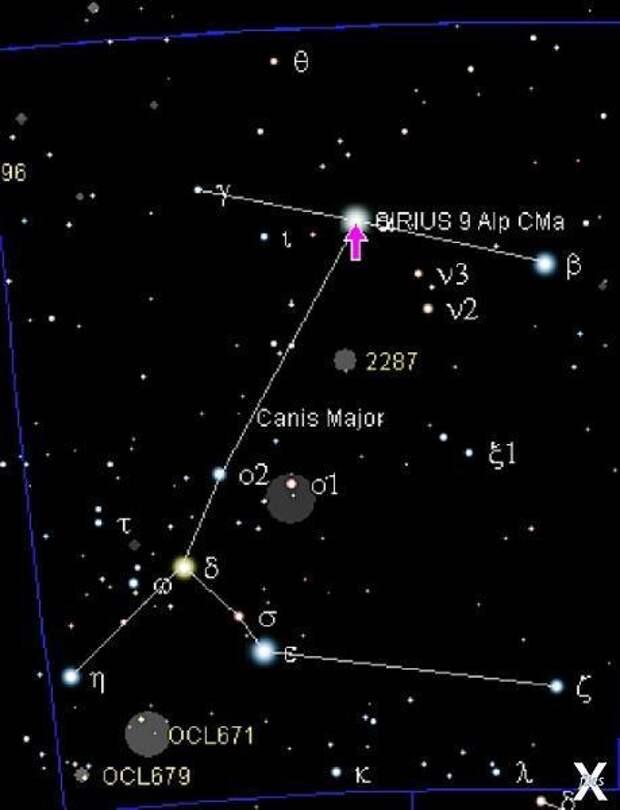 Сириус находится в созвездии Большого...