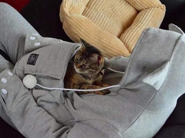 худи с отсеком для обнимашек вашего питомца игрушки для животных, коты, собаки