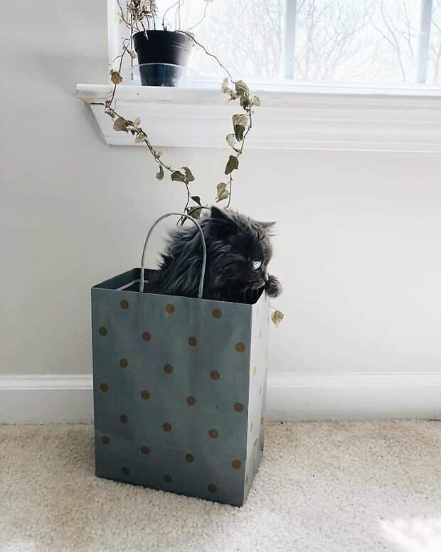Слепой кот Мерлин - новая звезда Инстаграма СЛЕПОЙ КОТ, возьмите в приюте, доброта спасет мир, домашние животные, кот, коты, питомец, слепой котик