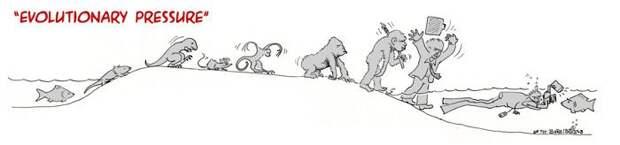Веселые картинки на тему эволюции (42 фото)