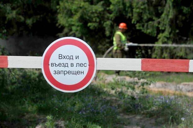 На Кубани запретили ходить в лес до 11 января