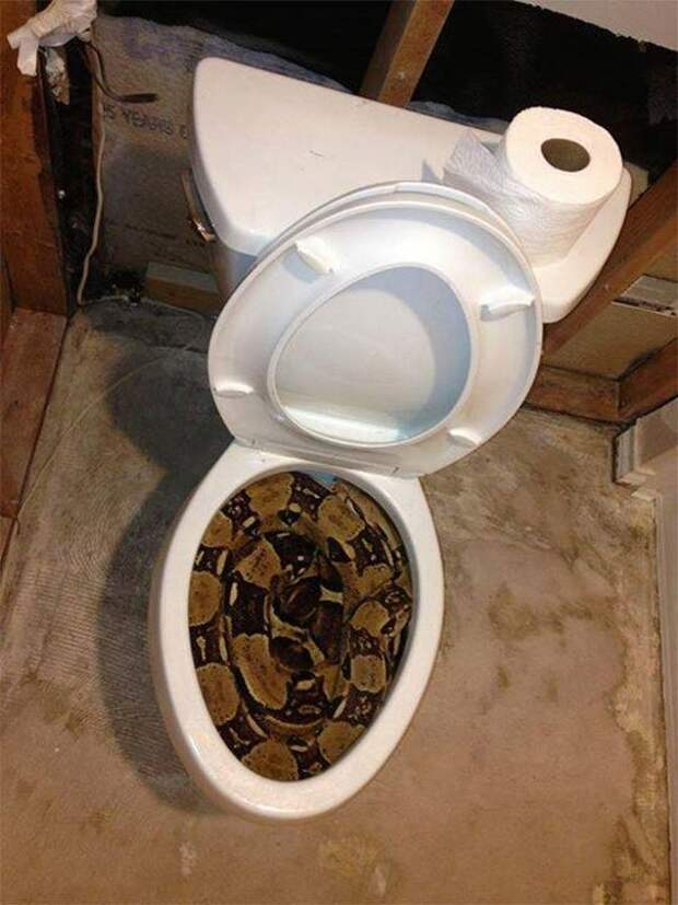17. Туалет в Австралии животные, мир, подборка, природа, ужас, фото, явление