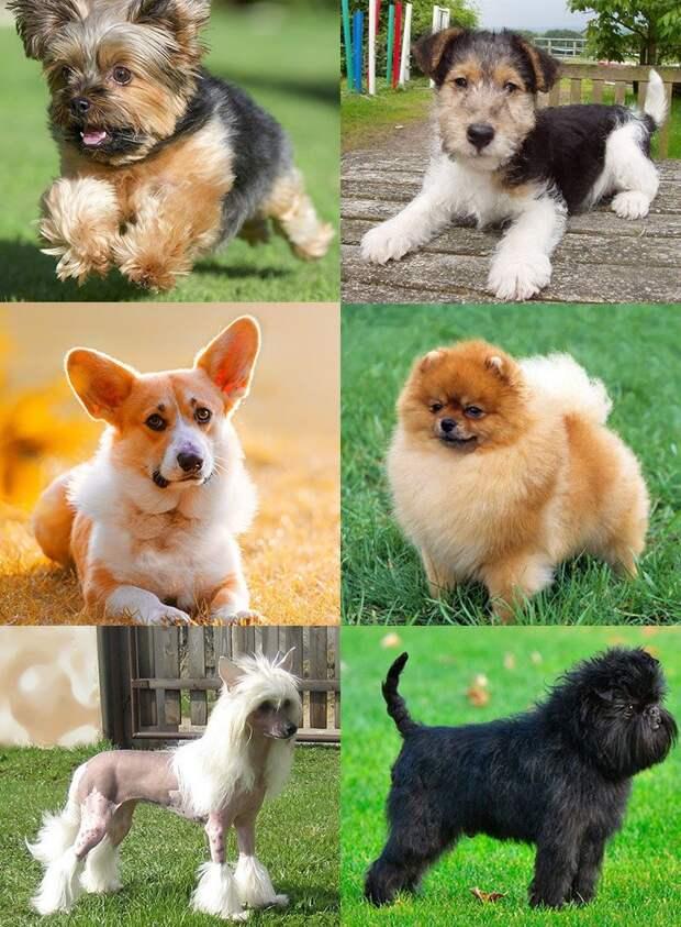 Музы, герои и президентские особы: маленькие собаки с большой историей