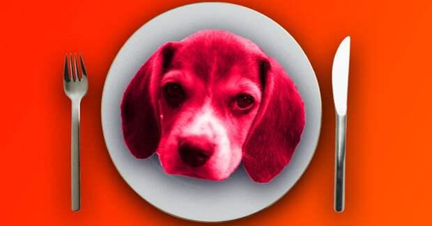 Зачем больные туберкулезом ели собак в СССР?