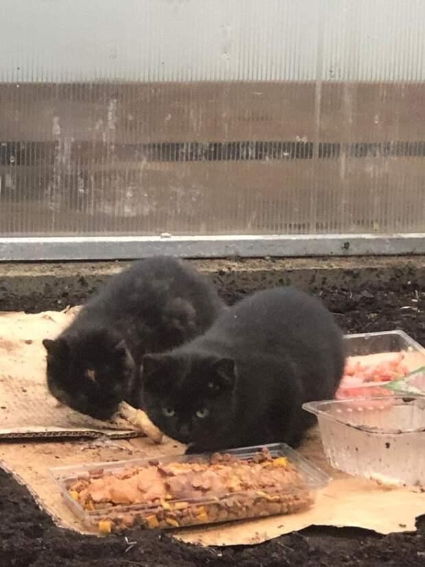 Помогите нам подарить котятам жизнь, не позволив сгинуть на дачах...