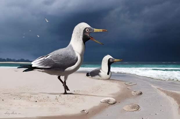 Останки древней зубастой птицы впервые обнаружили на территории России