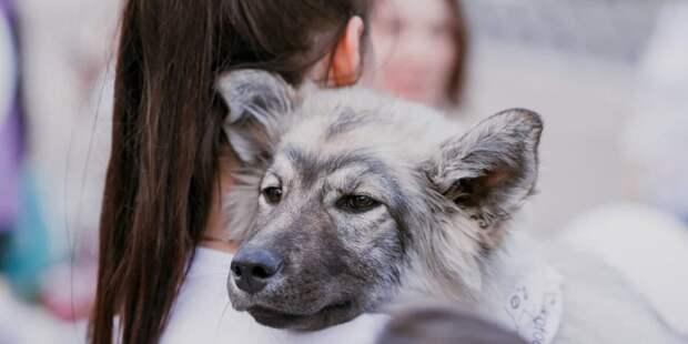Сергунина: В Москве при участии фондов помощи животным проведут акцию «В добрые руки» Пресс-служба Комитета общественных связей и молодежной политики