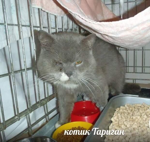 «Усыплю его, сам виноват!» Хозяин пустил кота к собакам и возмущается, что раны не заживают