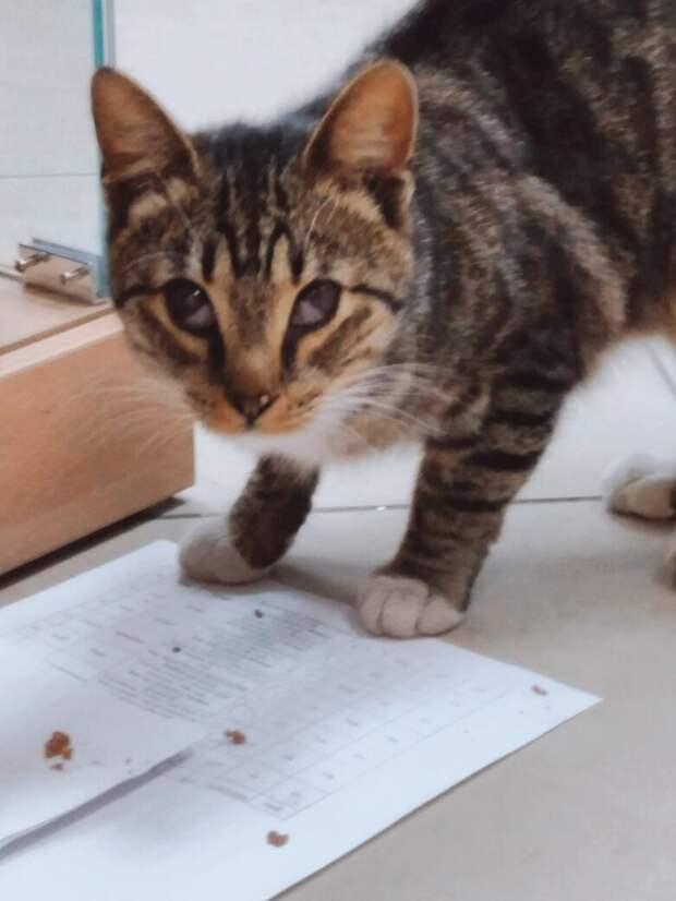 SOS! У котёнка беда, без помощи он скоро погибнет