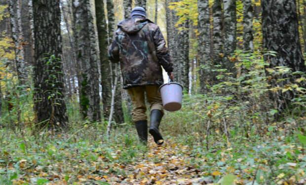 Грибник пошел в лес, но вместо грибов нашел тайник с деньгами