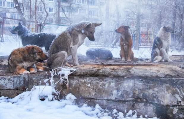Запрет кормления бездомных животных вПерми вызвал недовольство вГосдуме: Новости ➕1, 13.09.2021
