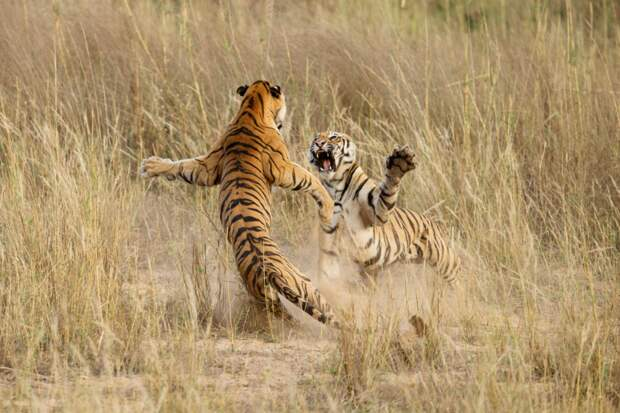 ARCHNA SINGH / National Geographic