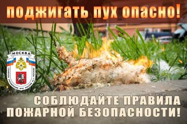 Тополиный пух — источник пожарной опасности и опасная «игрушка» для детей!