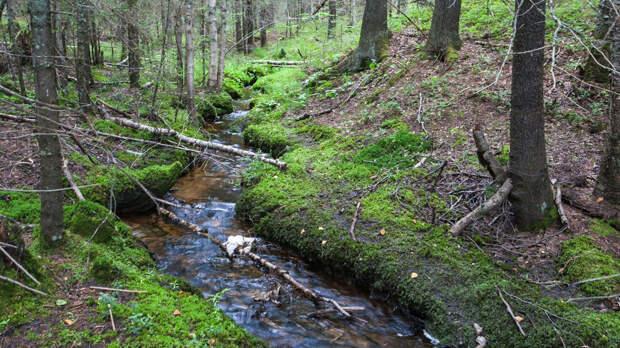 Архангельская область готова стать донором посадочного материала для леса