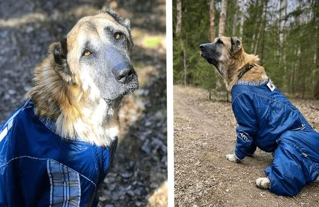 Разводчики довели собаку до истощения и просто выбросили. Волонтеры спасли ее от гибели