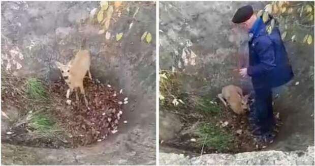 Пожилая пара помогла косуле выбраться из бетонной ловушки (1 фото + 1 видео)