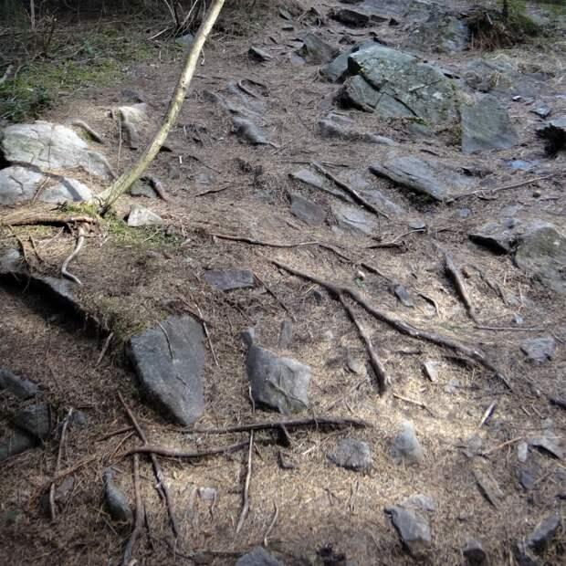 Лес вокруг Паасо