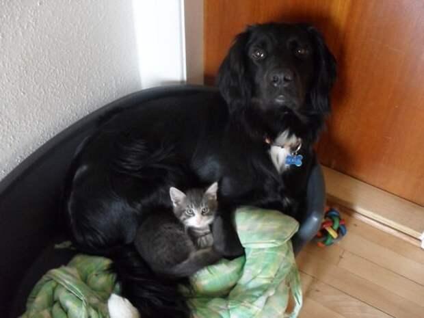 31 случай, когда коты были по-настоящему добрыми коты, позитив, добро, животные, дети