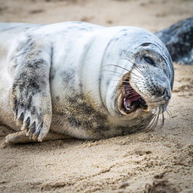☺️ Эти 11 морских котиков в хорошем настроении, и они точно поднимут его вам