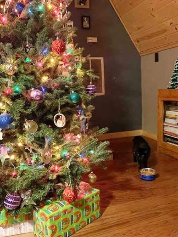 Целую неделю раздавался отчаянный кошачий «крик»: на дереве сидел испуганный кот, который не мог спуститься