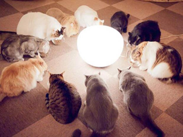 кафе для котов в Японии
