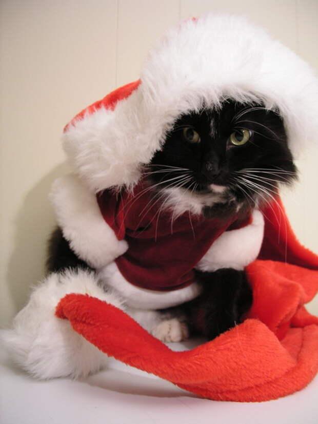 3166706_Christmas_card_2006_by_lexidh (700x900, 65Kb)