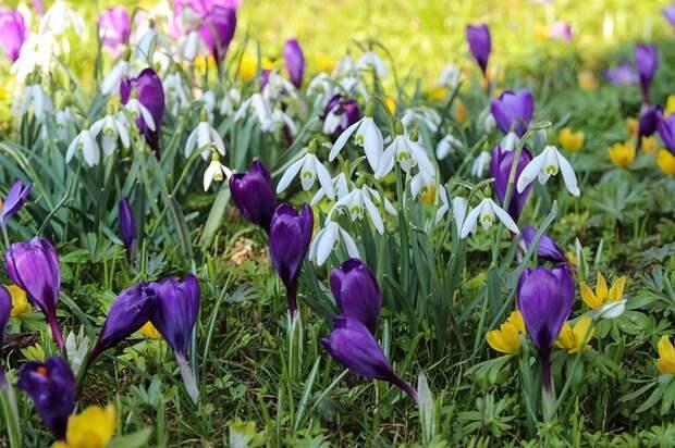 Ботанический сад зовёт отмечать День подснежника и любоваться орхидеями