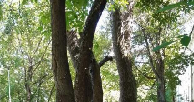 Сухие ветки деревьев больше не мешают жильцам дома на Красноказарменной