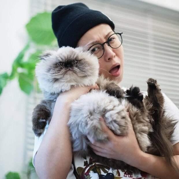 Хозяйка Нона обожает его и всячески балует. Но кота это не очень-то радует животные, кот, милота, мимика, морда, ненависть