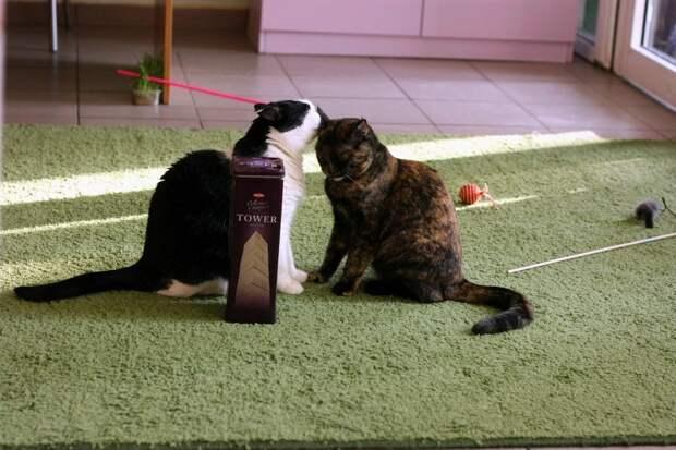 В Ижевске из-за долгов котокафе 12 животных оказались взаперти