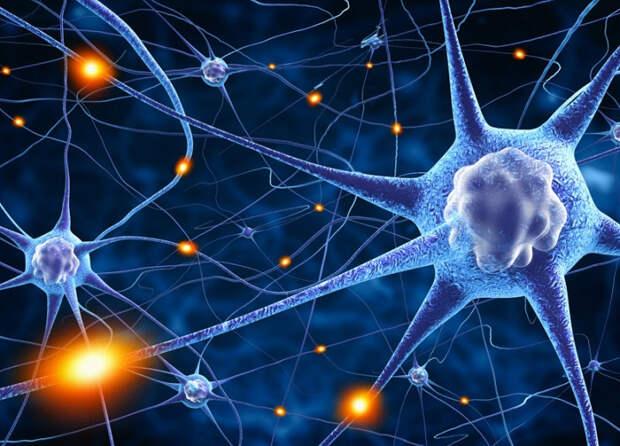 Корейские ученые создали искусственные нервы и научили мозг-транзистор ловить мяч