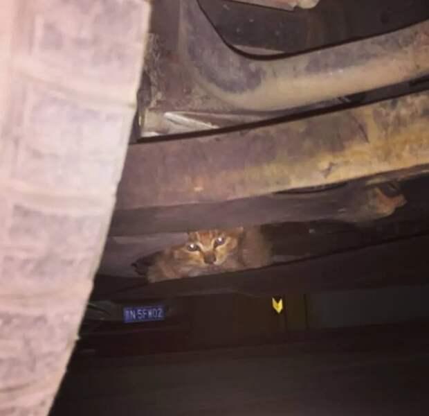 Девушка потратила всю ночь, чтобы найти кричащего котика, но чтобы его спасти, понадобились 7 мужчин и еще 6 часов