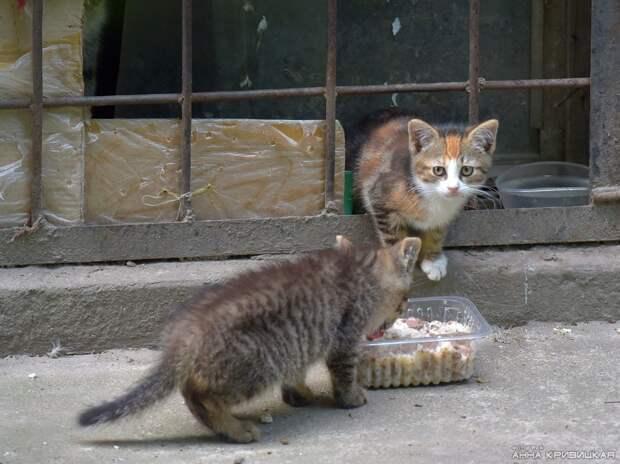В этом дворе котята почти никогда не выживают... Помогите, хотя бы временным домом!